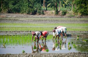Agroecology and food sovereignty